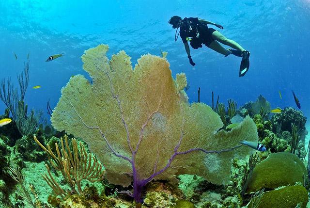 Scuba diver ocean