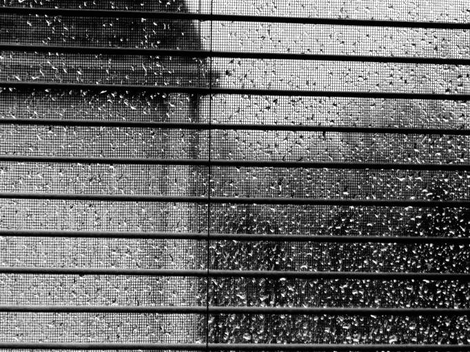 blinds rain widow