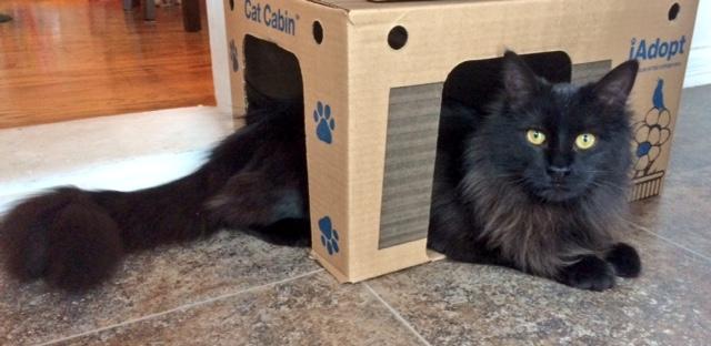 cat-bandit